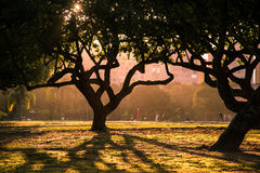 Δέντρα στο πάρκο Στοκ εικόνες με δικαίωμα ελεύθερης χρήσης