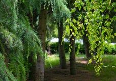 Δέντρα στο πάρκο στοκ φωτογραφία με δικαίωμα ελεύθερης χρήσης