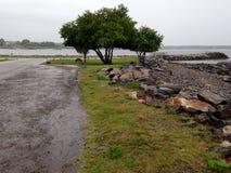Δέντρα στο σημείο Στοκ εικόνες με δικαίωμα ελεύθερης χρήσης