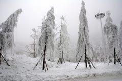 Δέντρα στο τοπίο χιονιού Στοκ Εικόνες