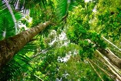 Δέντρα στο τροπικό δάσος EL Yunque, Πουέρτο Ρίκο Στοκ φωτογραφία με δικαίωμα ελεύθερης χρήσης