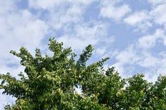 Δέντρα στο υπόβαθρο ουρανού Στοκ εικόνα με δικαίωμα ελεύθερης χρήσης