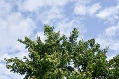 Δέντρα στο υπόβαθρο ουρανού Στοκ Εικόνες