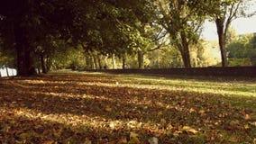 Δέντρα στο φθινοπωρινό δάσος απόθεμα βίντεο