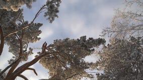 Δέντρα στο χειμερινό δασικό τοπίο απόθεμα βίντεο