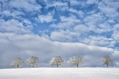 Δέντρα στο χειμερινό τοπίο 11 Στοκ Φωτογραφία