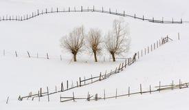 Δέντρα στο χειμώνα και τις φραγές στοκ φωτογραφία