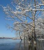 Δέντρα στο χιόνι κοντά στον ποταμό Στοκ Φωτογραφίες