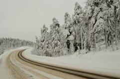Δέντρα στο χιόνι Ρωσία Χερσόνησος κόλα 2018 έτος Στοκ φωτογραφίες με δικαίωμα ελεύθερης χρήσης