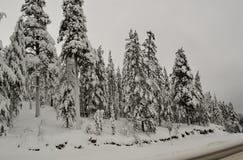 Δέντρα στο χιόνι Ρωσία Χερσόνησος κόλα 2018 έτος Στοκ εικόνες με δικαίωμα ελεύθερης χρήσης
