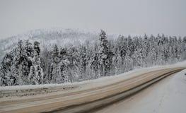 Δέντρα στο χιόνι Ρωσία Χερσόνησος κόλα 2018 έτος Στοκ φωτογραφία με δικαίωμα ελεύθερης χρήσης