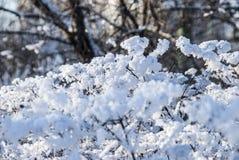 Δέντρα στο χιόνι Στοκ Εικόνες