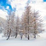 Δέντρα στο χιόνι Στοκ φωτογραφία με δικαίωμα ελεύθερης χρήσης