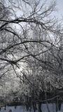 Δέντρα στο χιόνι Στοκ Φωτογραφίες