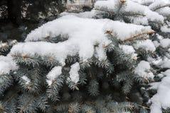 Δέντρα στο χιόνι Στοκ φωτογραφίες με δικαίωμα ελεύθερης χρήσης