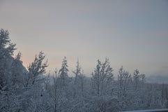 Δέντρα στο χιόνι Στοκ Φωτογραφία