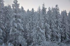 Δέντρα στο χιόνι Στοκ Εικόνα