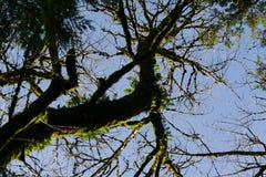 Δέντρα στο Όρεγκον Στοκ φωτογραφία με δικαίωμα ελεύθερης χρήσης