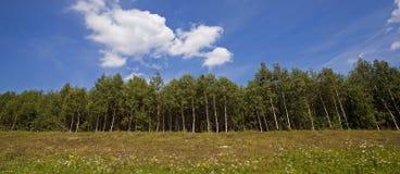 Δέντρα στο λόφο Στοκ Εικόνες