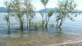 Δέντρα στο ύδωρ απόθεμα βίντεο