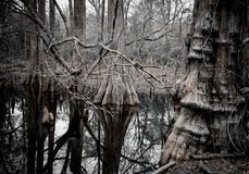 Δέντρα στο ύδωρ Στοκ Εικόνες
