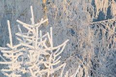 Δέντρα στο hoarfrost Στοκ εικόνες με δικαίωμα ελεύθερης χρήσης