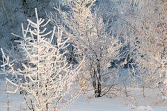 Δέντρα στο hoarfrost Στοκ εικόνα με δικαίωμα ελεύθερης χρήσης