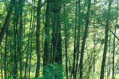 Δέντρα στο merapi υποστηριγμάτων στοκ εικόνα με δικαίωμα ελεύθερης χρήσης