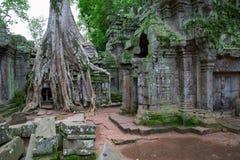 Δέντρα στο TA Prohm, Angkor Wat Στοκ εικόνα με δικαίωμα ελεύθερης χρήσης