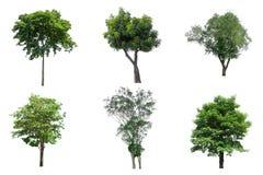 Δέντρα συλλογής απομονωμένος στο άσπρο υπόβαθρο Στοκ εικόνες με δικαίωμα ελεύθερης χρήσης