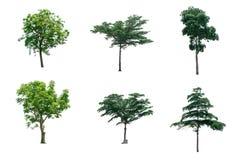 Δέντρα συλλογής απομονωμένος στο άσπρο υπόβαθρο Στοκ Εικόνες