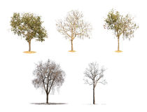 Δέντρα συλλογής απομονωμένος Στοκ Εικόνες
