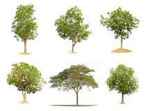 Δέντρα συλλογής απομονωμένος Στοκ εικόνες με δικαίωμα ελεύθερης χρήσης