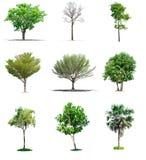 Δέντρα συλλογής στο άσπρο υπόβαθρο Στοκ Εικόνα
