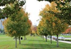 Δέντρα σφενδάμνου ζάχαρης Στοκ εικόνες με δικαίωμα ελεύθερης χρήσης