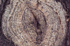 Δέντρα σύστασης αναδρομικά Στοκ φωτογραφία με δικαίωμα ελεύθερης χρήσης