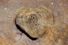 Δέντρα σύστασης Στοκ φωτογραφίες με δικαίωμα ελεύθερης χρήσης