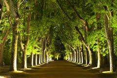 Δέντρα τή νύχτα Στοκ Φωτογραφίες