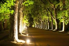 Δέντρα τή νύχτα Στοκ εικόνες με δικαίωμα ελεύθερης χρήσης