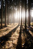 Δέντρα την ηλιόλουστη ημέρα στο δάσος φθινοπώρου με τη σκιά Στοκ Εικόνες