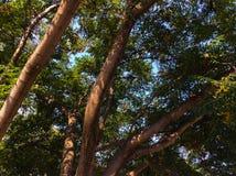 Δέντρα της άνοιξης Στοκ εικόνες με δικαίωμα ελεύθερης χρήσης
