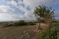 Δέντρα της Αφρικής Στοκ εικόνα με δικαίωμα ελεύθερης χρήσης