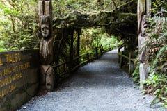 Δέντρα της πορείας μυστηρίου Στοκ εικόνες με δικαίωμα ελεύθερης χρήσης