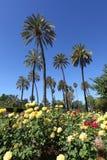 δέντρα της Σεβίλης φοινικών λουλουδιών Στοκ εικόνα με δικαίωμα ελεύθερης χρήσης