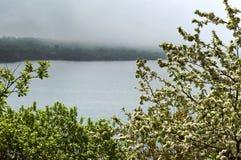 Δέντρα της Apple, δέντρο, άνοιξη, λουλούδι, λουλούδια, δέντρο, ομίχλη, λίμνη, ακτή Στοκ Φωτογραφία