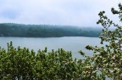Δέντρα της Apple, δέντρο, άνοιξη, λουλούδι, λουλούδια, δέντρο, ομίχλη, λίμνη, ακτή Στοκ φωτογραφία με δικαίωμα ελεύθερης χρήσης