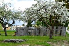 Δέντρα της Apple και παλαιός φυτικός κήπος Στοκ Εικόνες