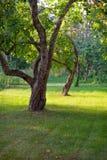 Δέντρα της Apple στον εγχώριο κήπο Στοκ φωτογραφία με δικαίωμα ελεύθερης χρήσης