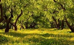 Δέντρα της Apple στο πάρκο Στοκ Εικόνες