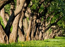 Δέντρα της Apple στο πάρκο Στοκ φωτογραφίες με δικαίωμα ελεύθερης χρήσης